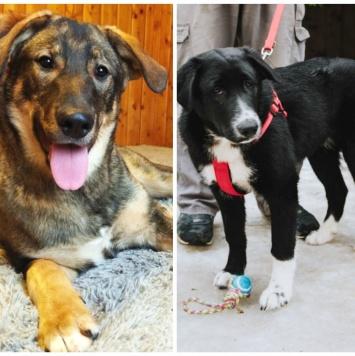 Рэмбо и Лео - Собаки в добрые руки