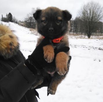 Бетани - Собаки в добрые руки