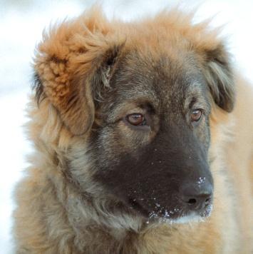 Верный - Собаки в добрые руки