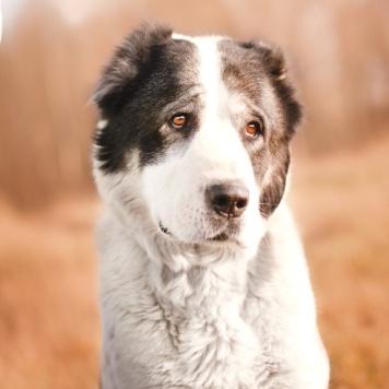 Сабира - Собаки в добрые руки
