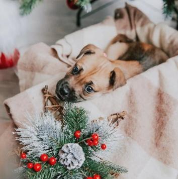 Умница Барса - Собаки в добрые руки