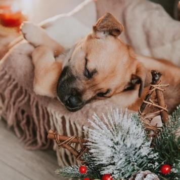 Альбус - Собаки в добрые руки