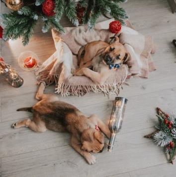 Прекрасный Альбус - Собаки в добрые руки