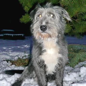 Тяпа - Собаки в добрые руки