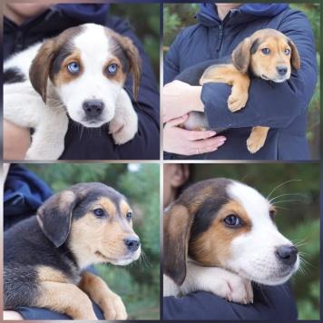 Потрясающие щенки - Собаки в добрые руки