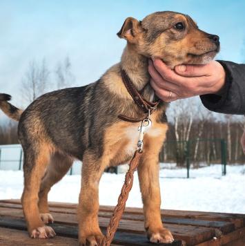 Мандаринка - Собаки в добрые руки