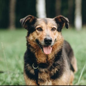 Дайяна - Собаки в добрые руки