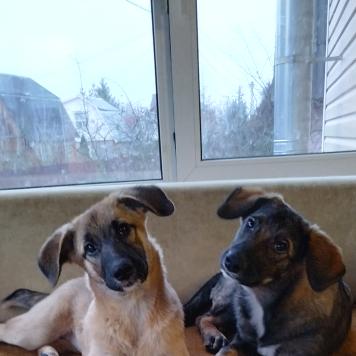 Аза и Ада - Собаки в добрые руки
