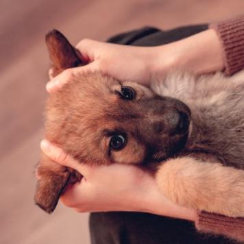 Рами - Собаки в добрые руки