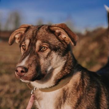 Ник - Собаки в добрые руки