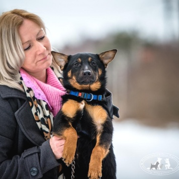 Флай - Собаки в добрые руки