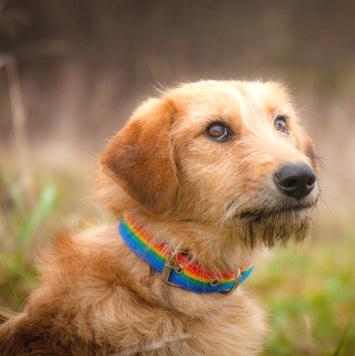Мими - Собаки в добрые руки