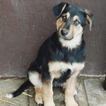 Варвара - Собаки в добрые руки