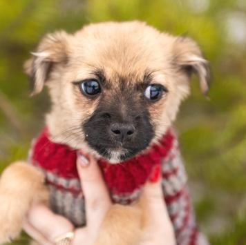 Кнопик - Собаки в добрые руки