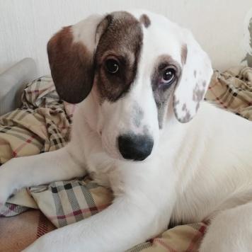 Арлекин - Собаки в добрые руки