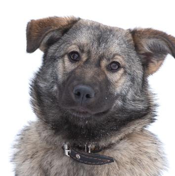 Тиффани - Собаки в добрые руки