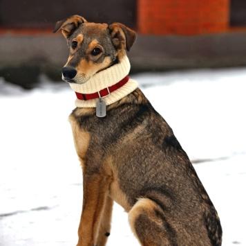 Гусляр - Собаки в добрые руки