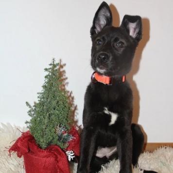 Акико - Собаки в добрые руки