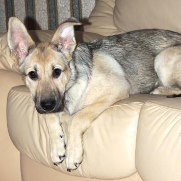 Маслина - Собаки в добрые руки