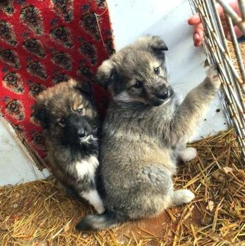 Мотя и Кусь - Собаки в добрые руки