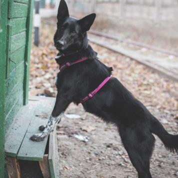 Рэми - Бейби - Собаки в добрые руки