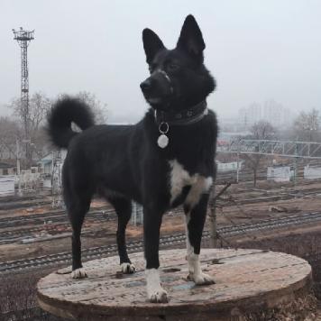 Жучка - Пропавшие собаки