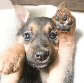 Лолочка - Собаки в добрые руки