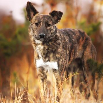Лойс - Собаки в добрые руки