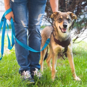 Рорри - Собаки в добрые руки