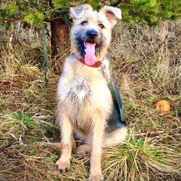 Северина - Собаки в добрые руки