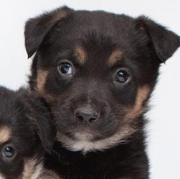 Шерхан - Собаки в добрые руки