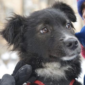 Фрося - Собаки в добрые руки