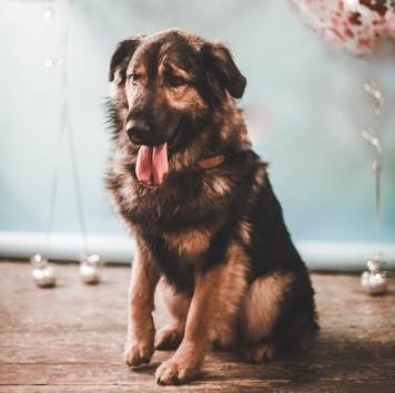Дождь - Собаки в добрые руки