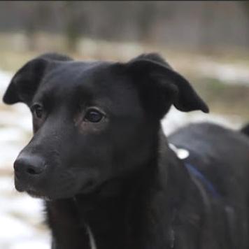 Томочка - Собаки в добрые руки