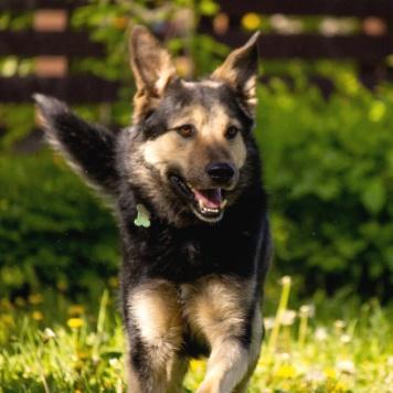 Рей - Собаки в добрые руки