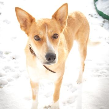 Айва - Собаки в добрые руки