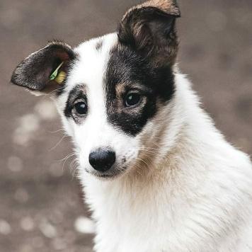 Смешная Красотка - Собаки в добрые руки