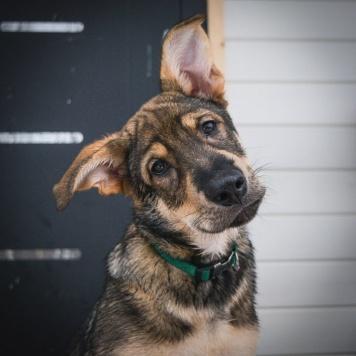 Лёлик - Собаки в добрые руки