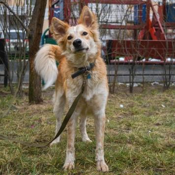 Тимьян (Тима) - Собаки в добрые руки