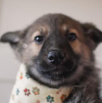Викентий - Собаки в добрые руки