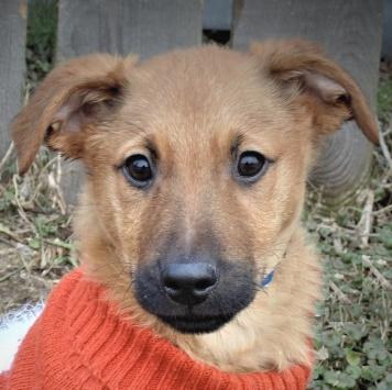 Гучи - Собаки в добрые руки