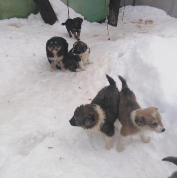 Пурсы - Собаки в добрые руки