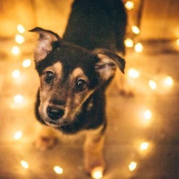 Джипси - Собаки в добрые руки