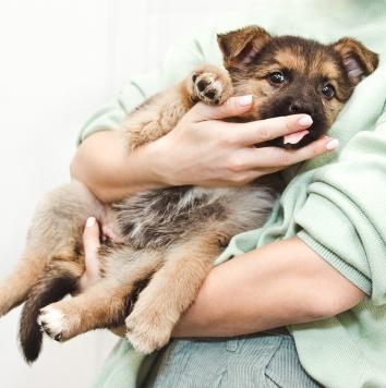 Глори - Собаки в добрые руки