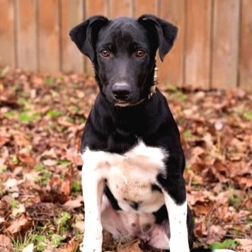 Флави - Собаки в добрые руки