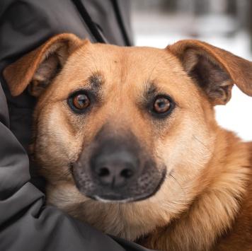 Фрейя - Собаки в добрые руки