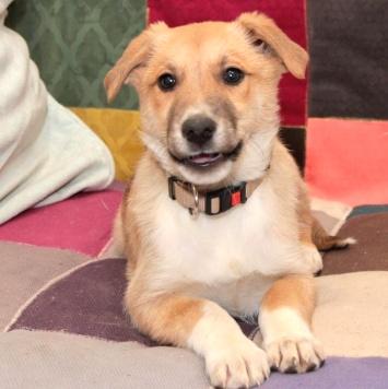 Марфа - Собаки в добрые руки
