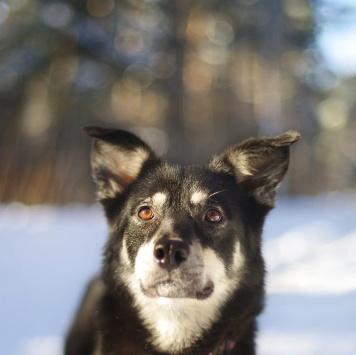 Стефания - Собаки в добрые руки