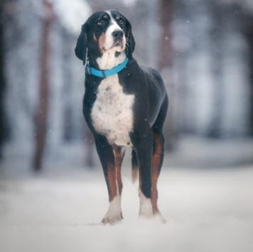 Зайра - Собаки в добрые руки