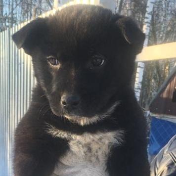 Зина - Собаки в добрые руки